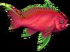 Fish 12
