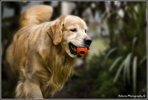 File:Finding the ball.jpg