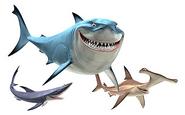 12 Step Sharks