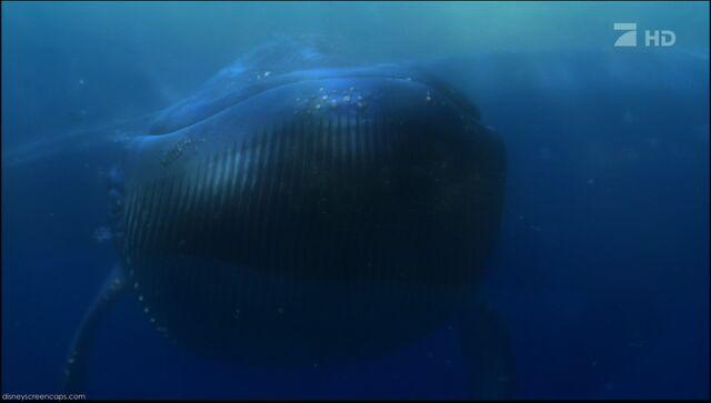 File:Nemo-disneyscreencaps.com-7218.jpg