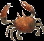 Krabby Realistico