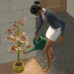 Simka podlewająca Drzewko Pieniężne w The Sims 2