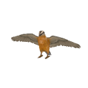 Nuthatch Transparent.png