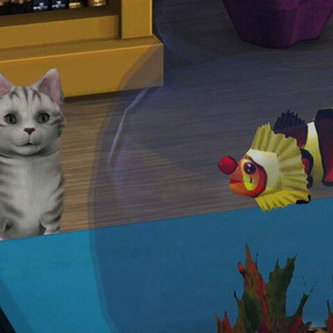 Kot patrzący na tragicznego błazenka