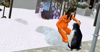 Simka głaszcząca pingwina.jpg