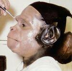 Sal Mineo makeup3