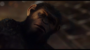 Caesar declares Koba not ape