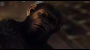 Caesar declares Koba not ape