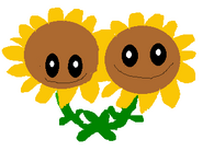 TWIN SUNFLLOWER DRAWING
