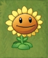 Sunflower game