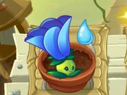 BigMoonflowerZenGarden