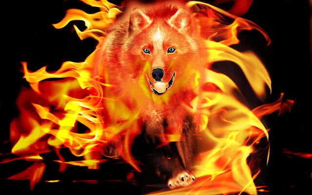 File:Flaming wolf by wolfsabymj-d4ptdb9.jpg