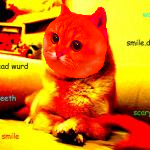 Smilecate