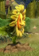 File:Rooted Sunflower.PNG
