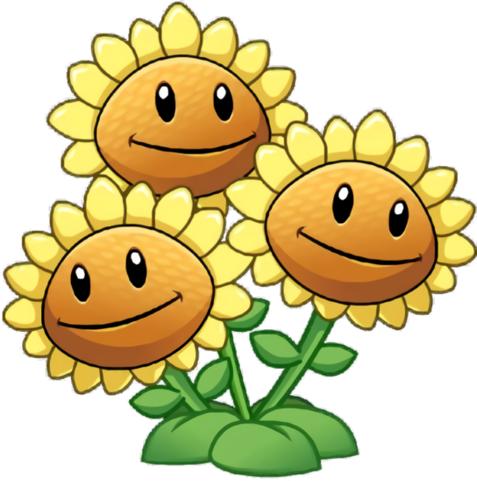File:Three head sunflower close up.png