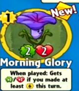 Receiving Morning Glory