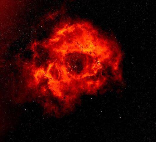 File:Space Rose.JPG