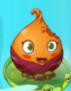 Sweet Potato first degrade