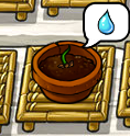 File:MysterySprout.png