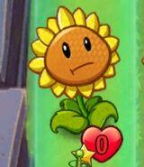 Sunflower destroyed