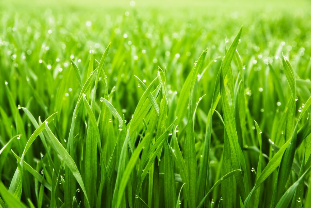 Grass | Plant Tycoon Wiki | Fandom powered by Wikia