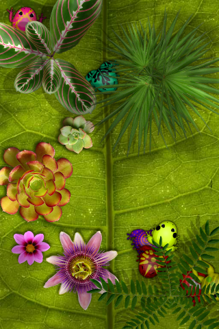 Pocket frogs scenery