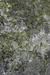 Lichen Habitat