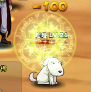 Pet skill