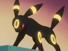 Gary Umbreon Flash