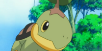 Gardenia's Turtwig (anime)