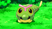 Caterpie BW132