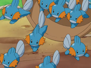 Old Man Swamp Mudkip