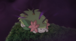 Shaymin Land Forme Seed Flare
