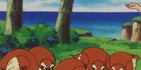 Wilbur's Pidgey