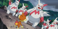 Zangoose (DP051)