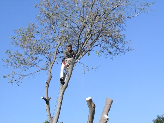 File:DFW Tree Removal - Dallas Tree Removal 214- 556-5079.jpeg