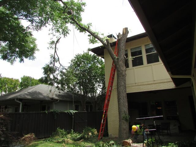 File:Dallas Tree Service - Dallas Tree Removal - 214- 556-5079.jpeg