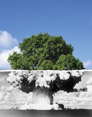 File:War-peace-tree1.jpg