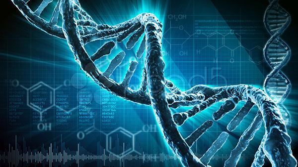 File:Genetic Manipulation.jpeg