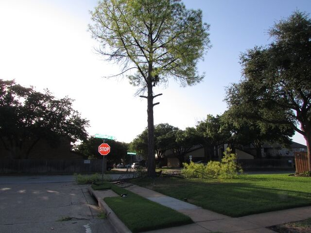 File:214- 556-5079 - DFW Tree Removal.jpeg