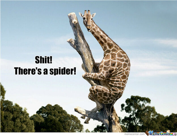 File:Even-giraffes-are-scared-of-spiders o 1535255.jpg