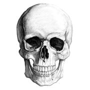 Skullpencil large
