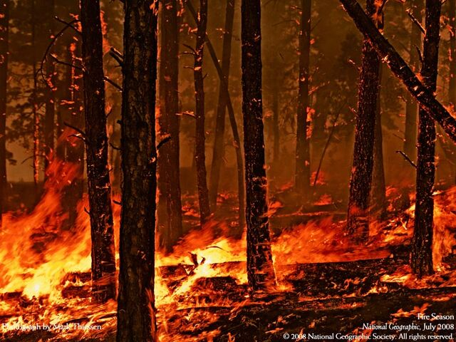 File:Forest-fire.jpg