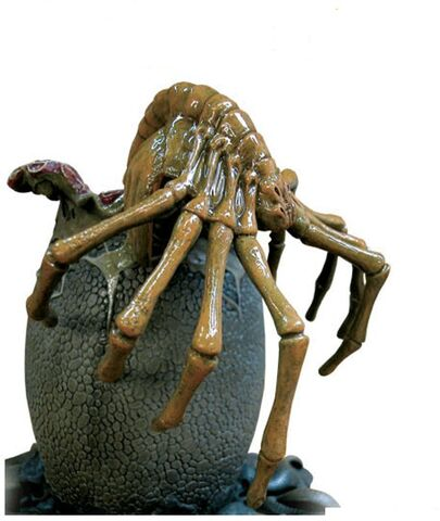 File:Facehugger.jpg
