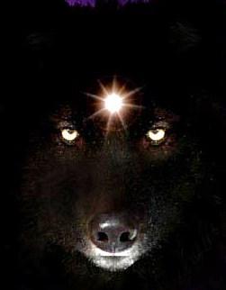 File:Jennovawolf.jpg