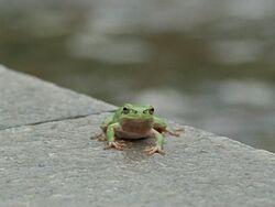 FrogHikaru