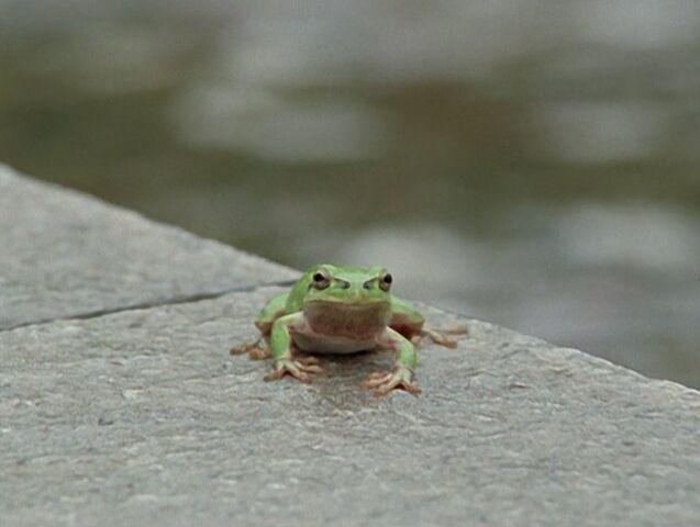 File:FrogHikaru.jpg