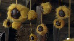 Furry Warts