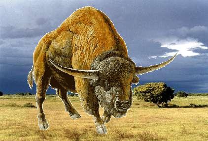 O Bisonte Banda Bison latifrons...