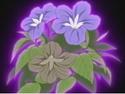 HPC20.Flower